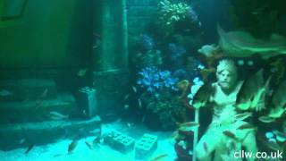 HD Atlantis Submarine Voyage POV, with clear sound!