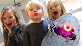 Repeat youtube video HATCHIMAL HATCH DAY DISASTER!