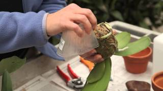 The Garden Made Simple - Repotting Your Orchid