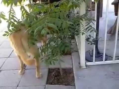 FUNNY STRANGE!!! Dog slow walk trance around tree