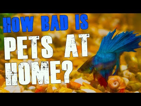 Buying Fish From Pets At Home - Is It That Bad?