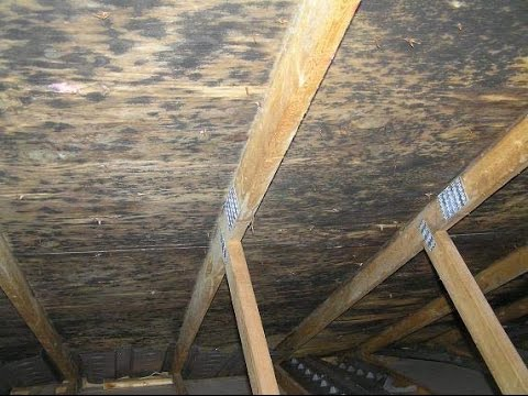 Attic or Crawl Space Mold Cleanup  MMR Stain Remover Woodbridge and Fairfax VA