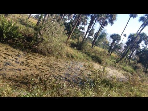 TheDailyWoo - 899 (12/17/14) Abandoned Tarzan Theme Park