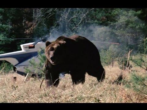 Grizzly  (1976) HD - Srpski prevod