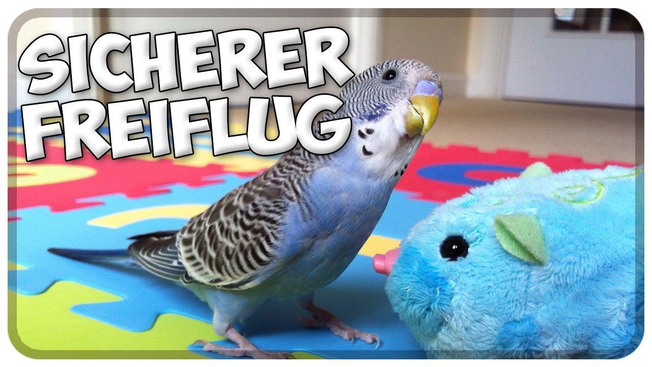 sicherer freiflug im zimmer v gel sittiche papageien sicher im haus fliegen lassen tipps. Black Bedroom Furniture Sets. Home Design Ideas