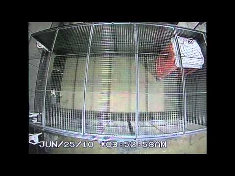 Police CCTV Footage of G20 Detention Center for the public record Part 5/6
