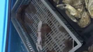 видео Где купить морепродукты