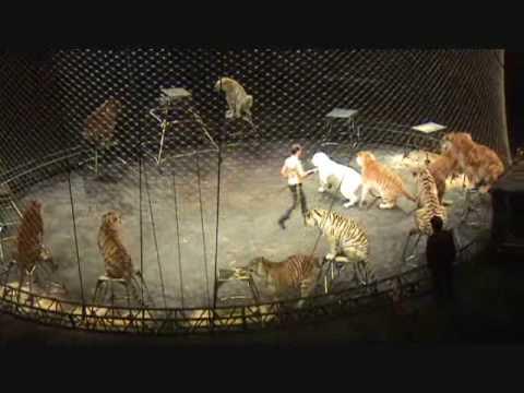 tiger act at Ringling Bros Circus