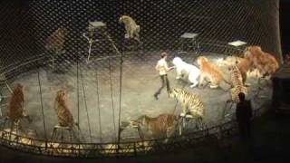 Tiger Act at Ringling Bros Circus