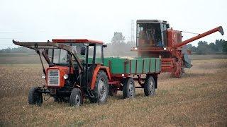 Ursus C-330, Bizon Super Z056, żniwa, zbiór pszenicy