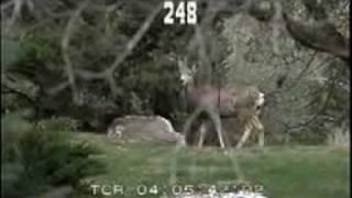 10632-10634_wildlife