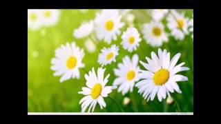 Xuân bình an! Start - Thanh Nhàn - Quỳnh Lưu