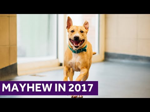 Mayhew in 2017 | London Animal Rescue and Welfare