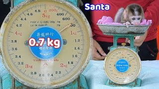 13-day old orphan baby Santa was born - It amazing her weight is 0.7 kg thumbnail