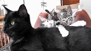 The Cutest Little Foster Cat Family Ever thumbnail