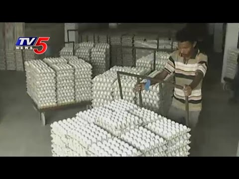 Success Story | Paruchuri Venkata Rao Poultry Farming | Annapurna | Guntur | TV5 News