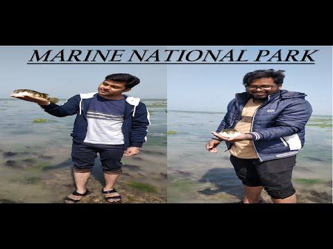 Marine national park || Narara Tapu || Jamnagar || Gujarat|| #Bandiya || #The  Luka Show