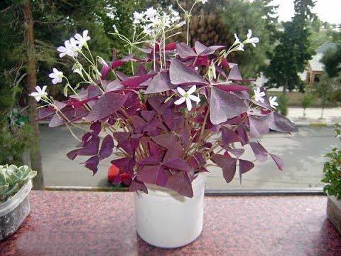 Комнатные растения и домашние цветы, фото, названия, уход