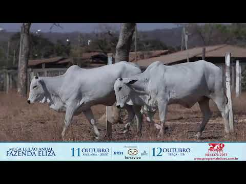 LOTE 176