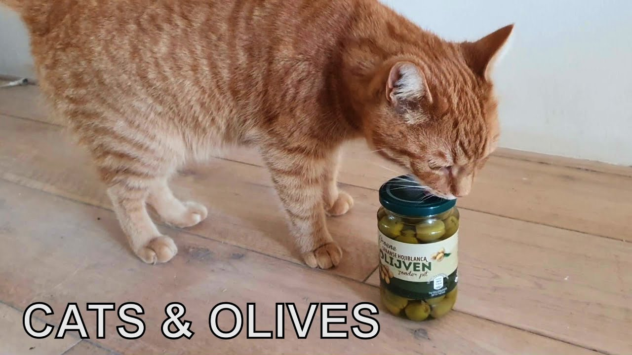 Cat tries olives