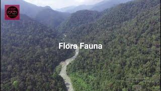 KAZE - Flora Fauna (Official Video)