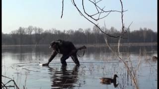 Весенняя охота на селезня с подсадной уткой 7.