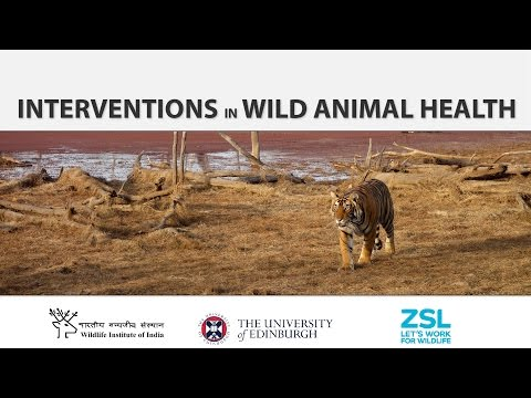 Interventions in Wild Animal Health