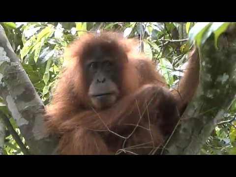 2b Bukit Lawang - Forest Men