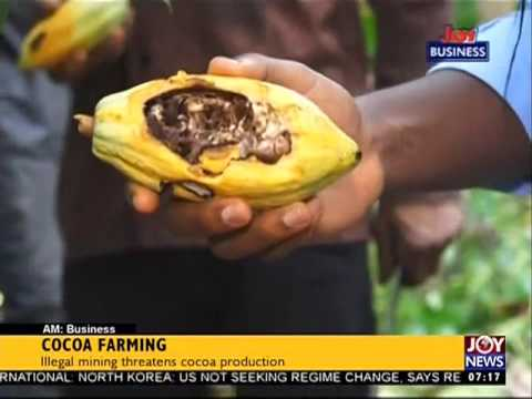 Cocoa Farming: Illegal Mining Threatens Cocoa Production - AM Business on Joy News | 2 Aug 2017