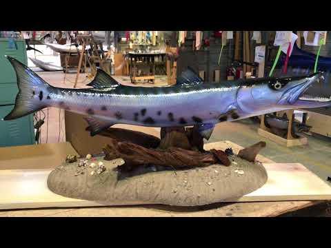 Custom Barracuda Fish Mount - Gray Taxidermy Fishmounts