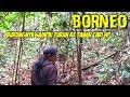 Edan Burung Kapas Tembak Hutan Nya Gacor Dorkalimantan  Mp3 - Mp4 Download