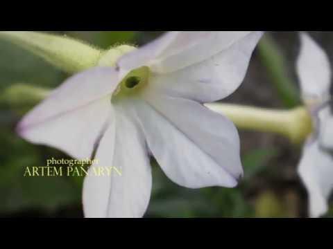Полевые цветы (Натюрморты)