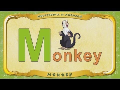 Multipedia of Animals. Letter M - Monkey