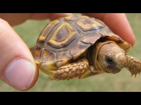 THOUSANDS OF TORTOISES & TURTLES!!!! Brian Barczyk