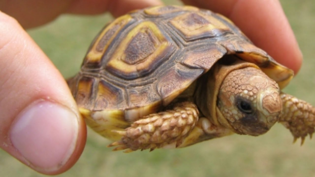 thousands of tortoises u0026 turtles brian barczyk youtube