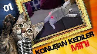 Konuşan Kediler Mini 1 - En Komik Kedi ları