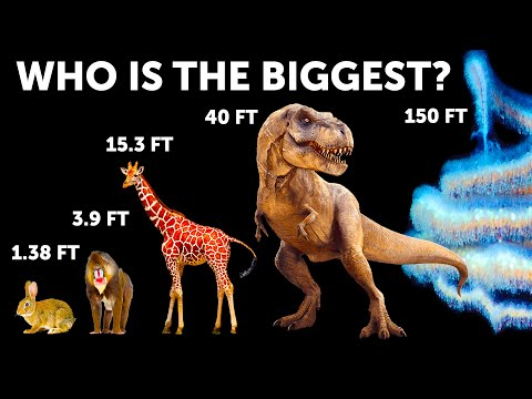 Animal Size Comparison (Whales Aren't Biggest!)  