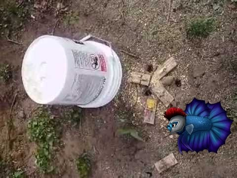 How To Trap Voles And Moles In Your Yard Youtube