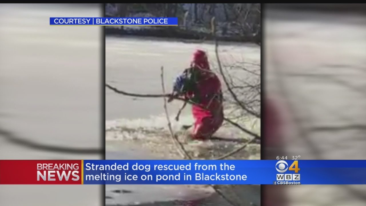 Stranded Dog Rescued From Melting Ice On Pond In Blackstone