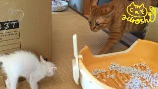 和室を探検していたところに、ひろしがやってきました↑ 初めて見る子猫...