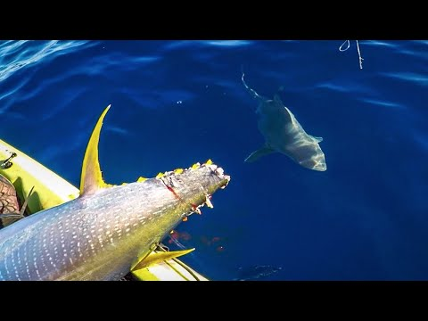Sharks Aren't Usually THIS Bad | Catch And Cook Yellow Fin Tuna | Deep Sea Kayak Fishing Tips