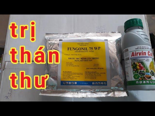 Thuốc đặc trị bệnh thán thư airvil cali và fungonil 75wp/thuốc thực vật hoàng dương