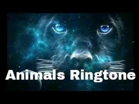 Animals Ringtone (Martin Garrix)
