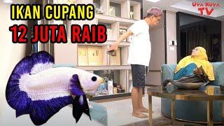 Ikan Cupang 12 Juta Dibuang Astrid Uya Kuya Stress Youtube