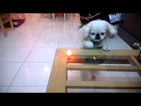 Mimi - Sát cá thuận tay trái - [My pet dog - Her name