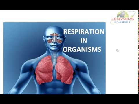 Class notes respiration in organisms session 1 for 7th cbse science