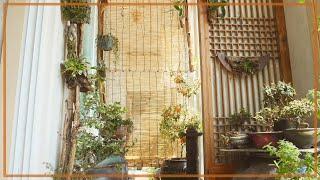 6월의 아파트 발코니(베란다) 정원 풍경, 대나무발과 …