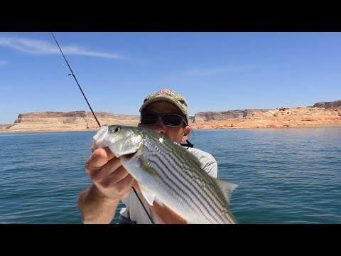 Lake Powell Striper Slurp Fishing Technique