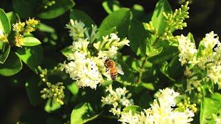Gambar cover Verso l'Agroecologia