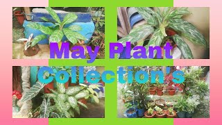 MY PLANTS COLLECTION 2020
